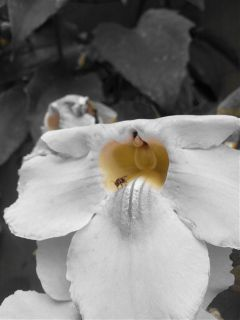 black & white color splash flower nature macro
