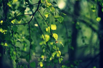 spring nikon nature