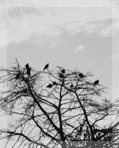 pets & animals photography nature black & white vintage