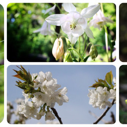 collage photography nature summer flower