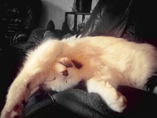 cat cute pets & animals