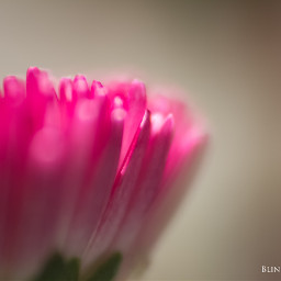 nature flower macro photography colorful