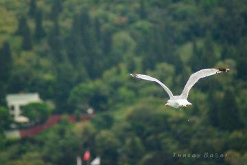 nature istanbul photography seagull bird