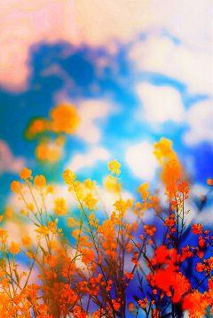 colorful cute color splash flower nature