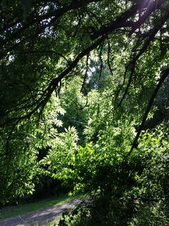 nature photography trees green sunlight
