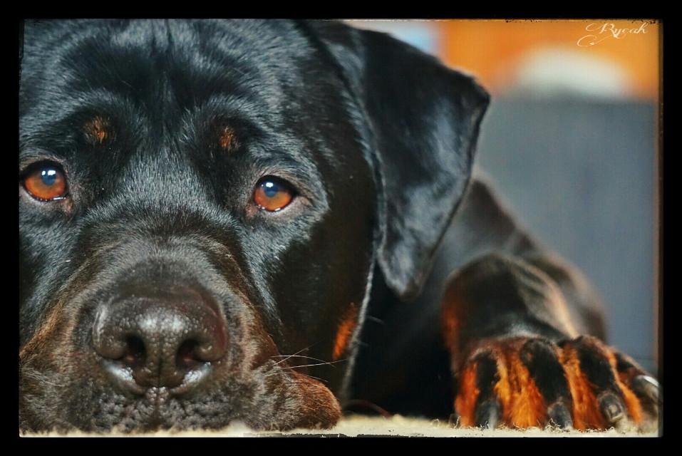 #love #pets & animals #photography #mansbestfriend