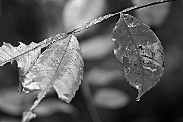 photography emotions rain nature