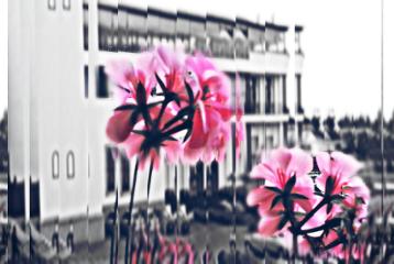 color splash flower