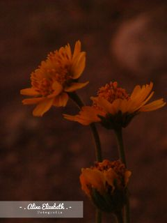 atardecerdeflores flower colorful nature photography