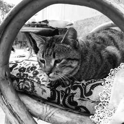 cat mansbestfriend photography black