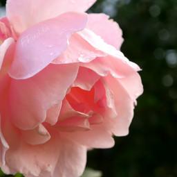 bokeh flower nature emotions love
