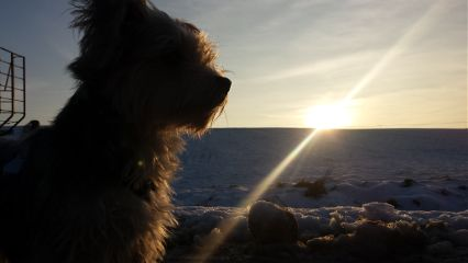 dog sun snow love freetoedit