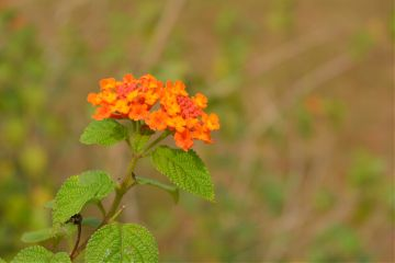 colorful cute flower nature summer
