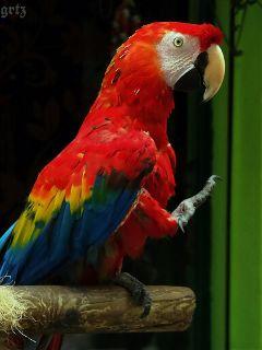 colorful cute petsandanimals photography parrot