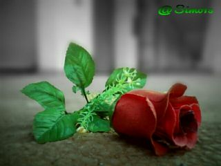 flower redflower green love photography