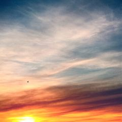 free freedom sky bird sunset