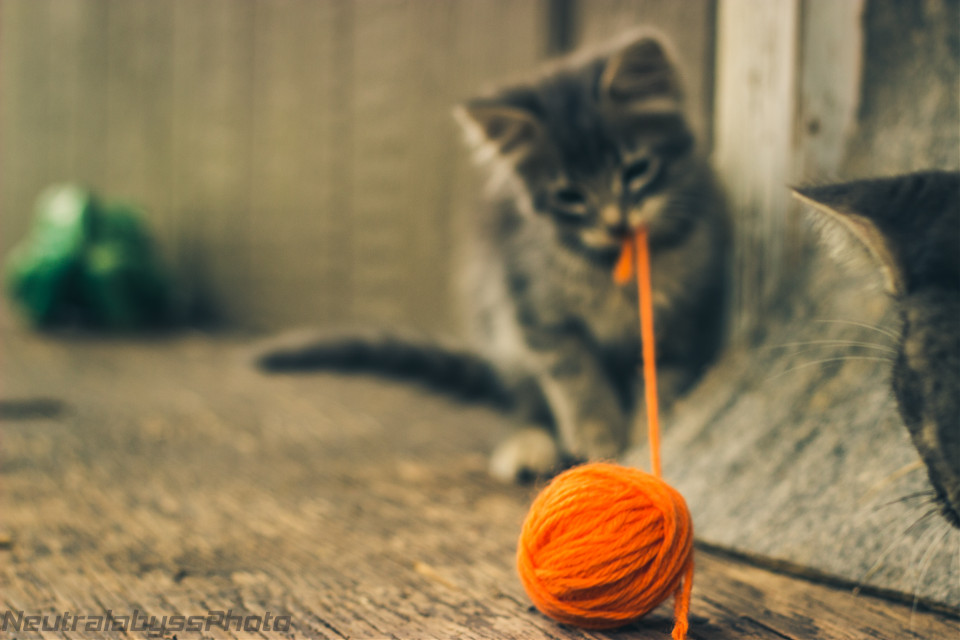 More kittens!  :) #cat #baby #cute #petsandanimals #photography #nature